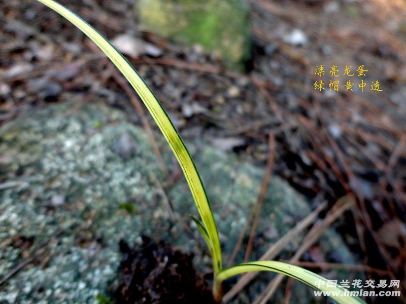 品种也不好!健康小草皮实--像农村的孩子,不知不觉就长大了.. 高清图片