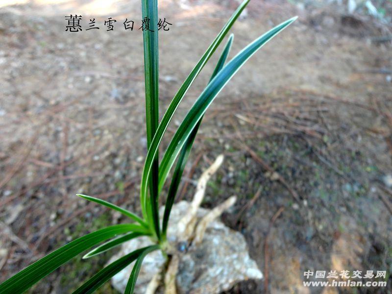 草覆虫结构图